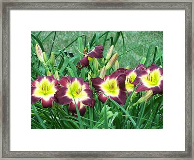 Framed Print featuring the photograph The Whole Family by Sandy Collier