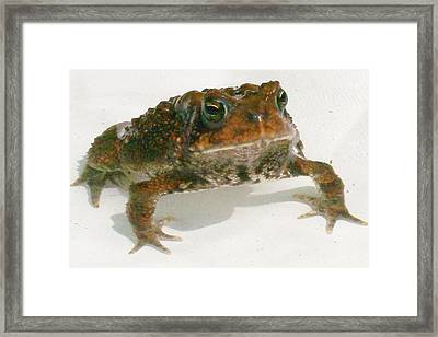 Framed Print featuring the digital art The Whole Toad by Barbara S Nickerson