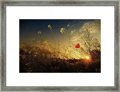 The Wild Garden Framed Print by Photo by cuellar