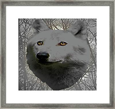 The Wilds Of Nature Framed Print by Debra     Vatalaro