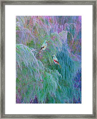 The Willows Framed Print