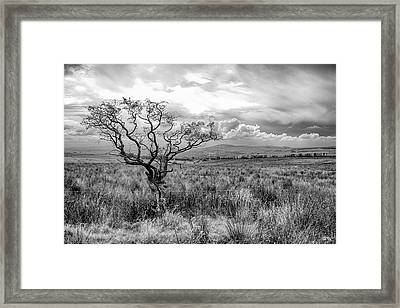 The Windswept Tree Framed Print