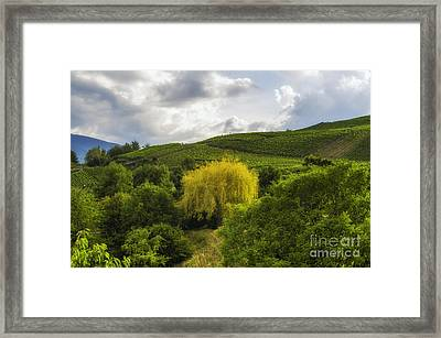 the wineyards of Loc Framed Print by Michelle Meenawong