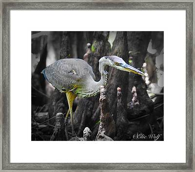 The Winged Stalker Framed Print