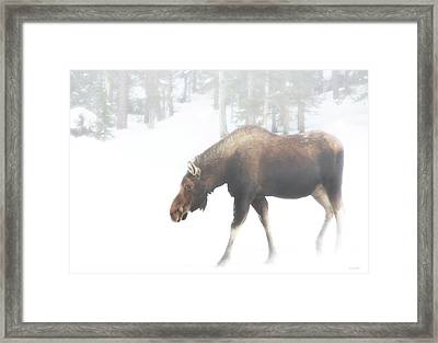 The Winter Moose Framed Print by Brian Gustafson
