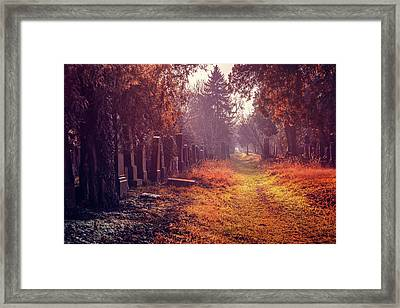 The Winter Path  Framed Print
