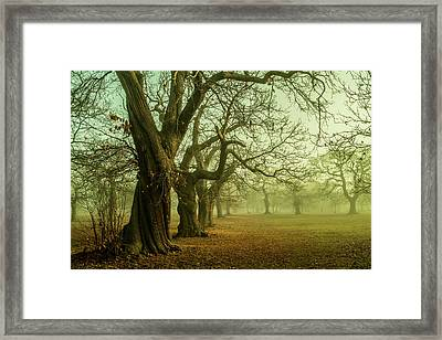 The Winter Trees Framed Print