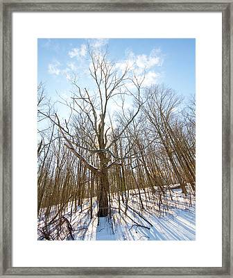 The Winter Woods Framed Print by Tim Fitzwater