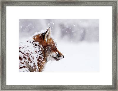 The Winterwatcher - Red Fox In The Snow Framed Print by Roeselien Raimond