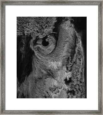 The Old Owl That Watches Blk Framed Print