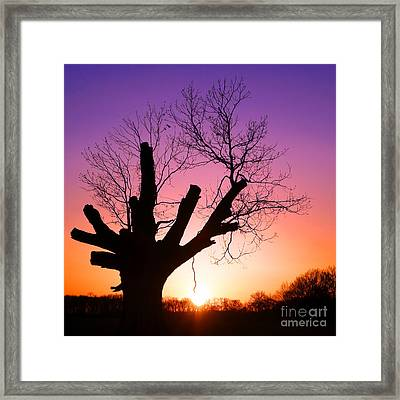 The Wise One Framed Print by Olivier Le Queinec