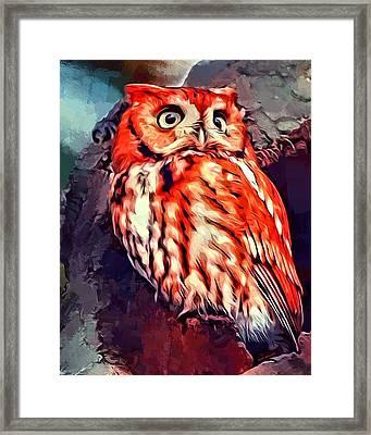 Red Morph Screech Owl Framed Print by Scott Wallace