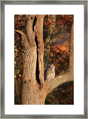 The Wise Owl Framed Print by Lori Deiter