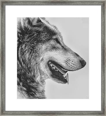 The Wolf Framed Print by Martin Newman