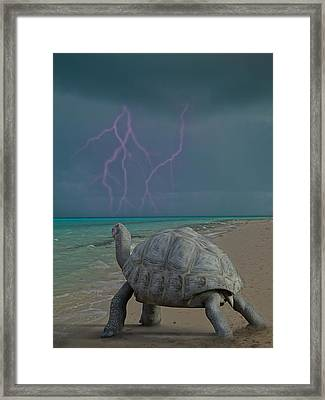 The Wonders Of Mother Nature Framed Print by Betsy Knapp