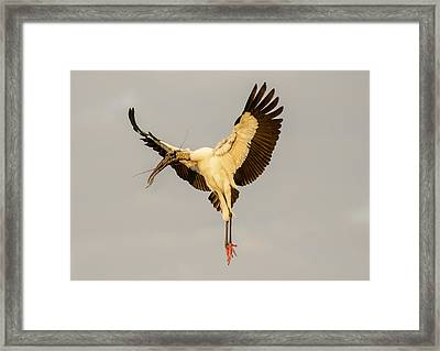 The Wood Stork Angel Framed Print by Phil Stone