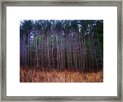 The Woods 3 Framed Print by Anna Villarreal Garbis