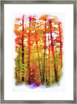 The Woods In Autumn Framed Print by Judi Bagwell