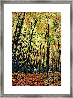 Framed Print featuring the photograph The Woods In The North by Michelle Calkins