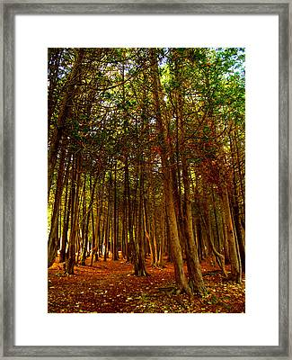 Framed Print featuring the photograph The Woods by John Hartman