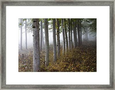 The Woods Framed Print by Rebecca Cozart