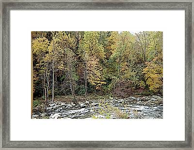 Framed Print featuring the photograph The Woods by Skyler Tipton