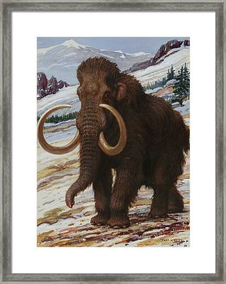 The Woolly Mammoth Is A Close Relative Framed Print by Charles R. Knight