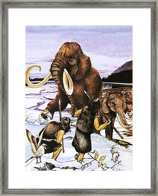 The Woolly Or Siberian Mammoth Framed Print