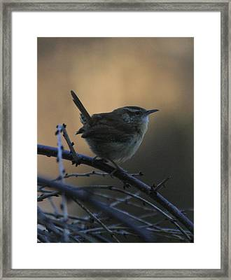 The Wren Framed Print by Christopher Kirby