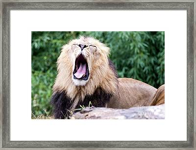 The Yawn Framed Print