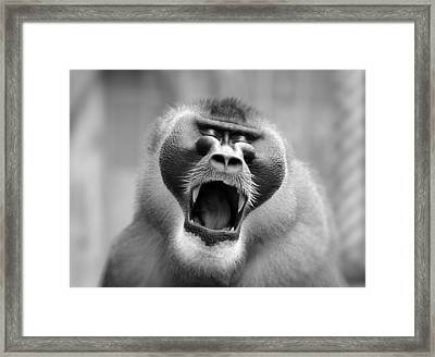 The Yawn I Framed Print by Antje Wenner