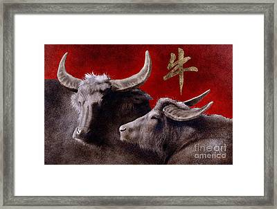 The Year Of The Ox... Framed Print by Will Bullas