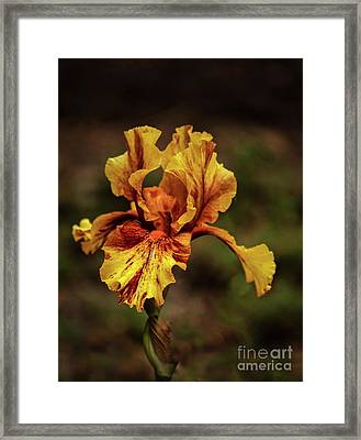 The Yellow Beauty Framed Print by Robert Bales