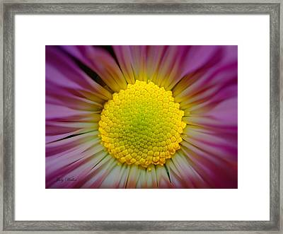 The Yellow Center Framed Print by Judy  Waller