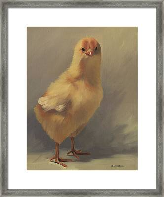 The Yellow Chick Framed Print