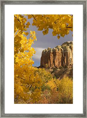 The Yellow Leaves Of Fall Frame A Rock Framed Print by Ralph Lee Hopkins