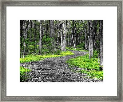 The Yellow Marsh Marigolds Of Spring Framed Print