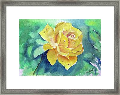 The Yellow Rose Framed Print