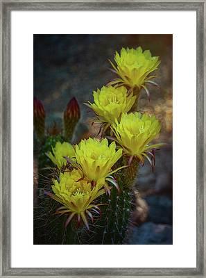 The Yellow Torch  Framed Print by Saija Lehtonen
