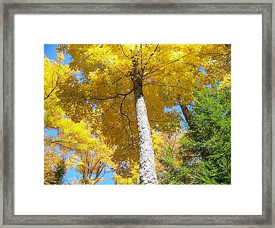 Framed Print featuring the photograph The Yellow Umbrella - Photograph by Jackie Mueller-Jones