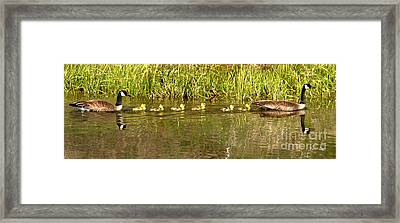 The Yellow Youngsters Framed Print