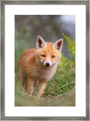 The Young And Eager Red Fox Kit Framed Print by Roeselien Raimond