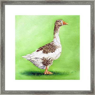 The Young Goose Framed Print