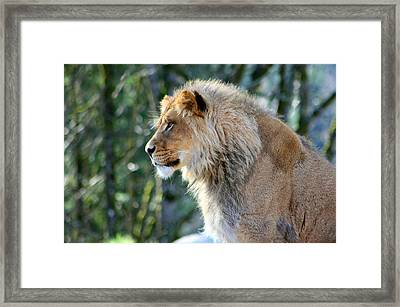 The Young King Framed Print by Nick Gustafson
