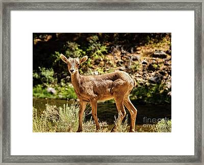 The Young One Framed Print by Robert Bales