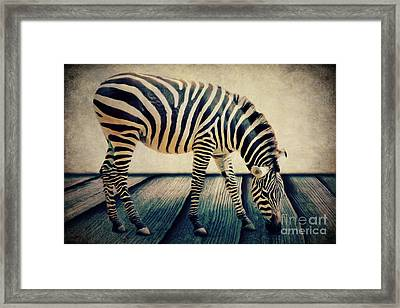 The Zebra Portrait Framed Print by Angela Doelling AD DESIGN Photo and PhotoArt