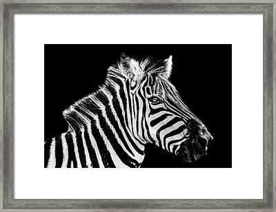 The Zebra Stripes Framed Print