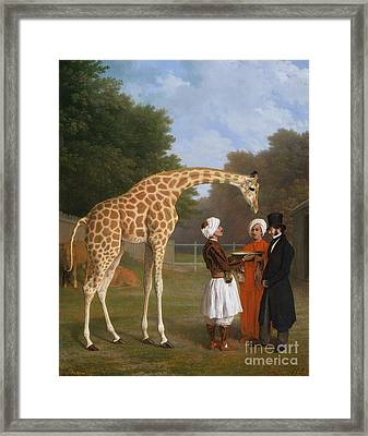 The Zoological Garden Framed Print by MotionAge Designs