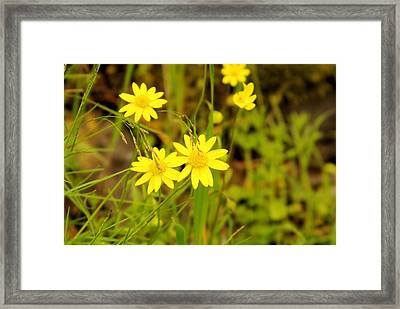 Thee Yellow Smiles  Framed Print