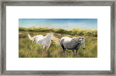 Thelma And Louise Connemara Ponies Framed Print by Vanda Luddy